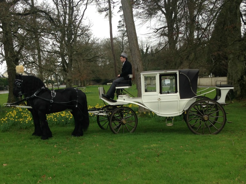 white wedding horse and carriage